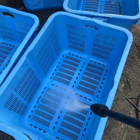 収穫カゴを洗います。
