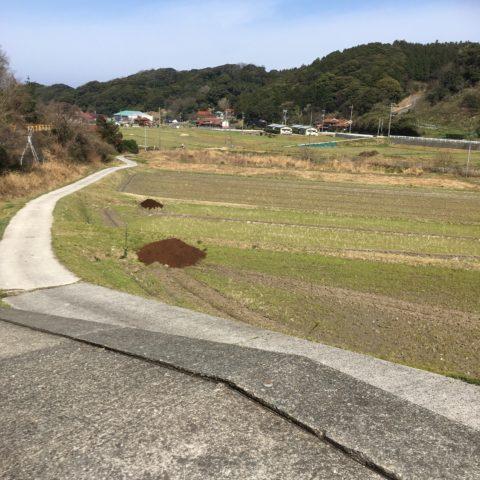 無角和牛の堆肥散布